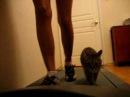 Кошка на беговой дорожке