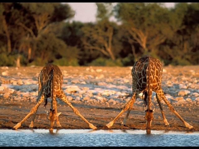 Беспокойные воды Африка