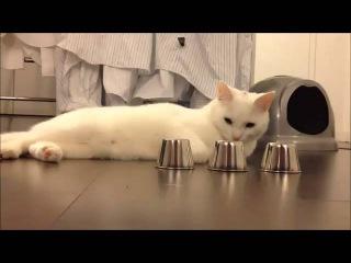 Нетипичное Голицыно - Кручу верчу, кота запутать хочу