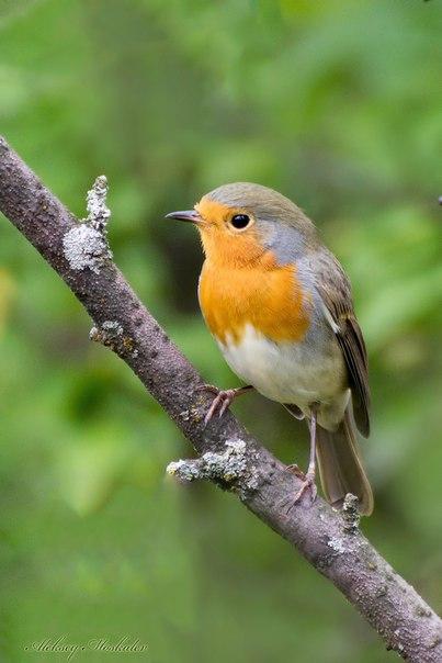 птицы воронежской области фото с названиями следует думать, что