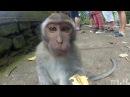 СМЕШНОЕ видео ПРО ЖИВОТНЫХ, уморительные животные, Подборка приколов с животным