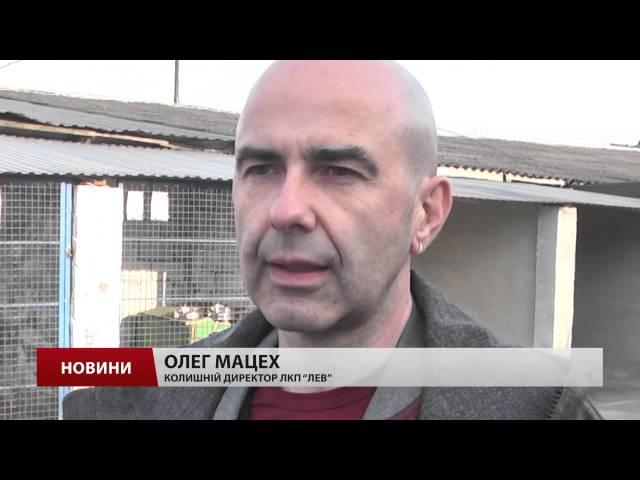Львів'ян зобов'язали зареєструвати домашніх собак