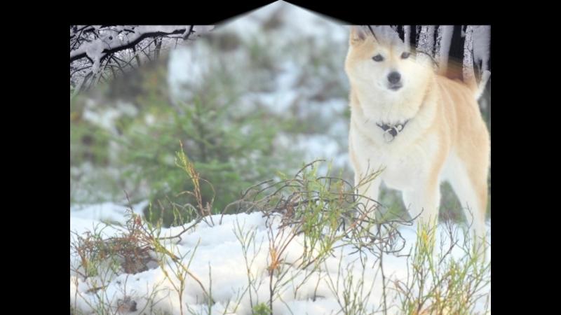 Зимова казка (телекомпанія Малий Любінь) , автор -- Косик Світлана