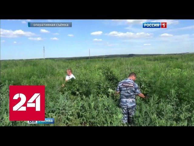 Канал россия конопля упоминания о марихуане первые