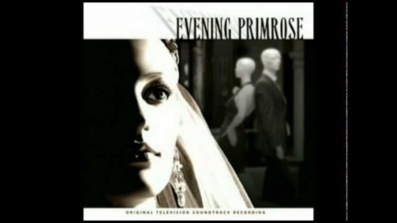 Take Me to the World Evening Primrose