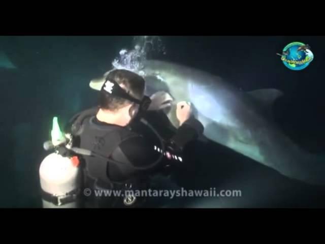 Delfin bittet Taucher um Hilfe