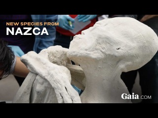 На раскопках в Перу обнаружили мумию, которую местные считают инопланетной