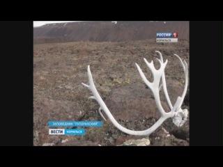 Вести Норильск 12 января 2017 года,  (четверг)