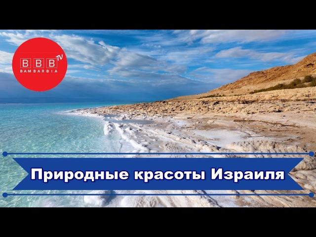 Экскурсии по красивым местам Израиля Мертвое море Крокодиловая ферма Большой кратер кибуцы