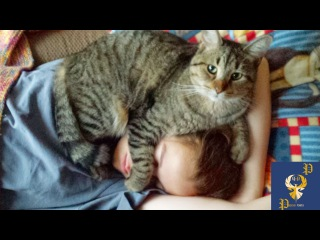 Cats Alarm Clocks - Cats Waking Up Their Owners Part 1