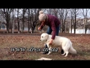 День сурка из жизни вашей собаки или почему пес непослушен