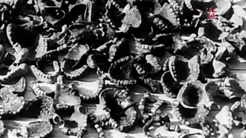 Без срока давности, Травники- школа палачей, 2015 год (документальный) качество Full