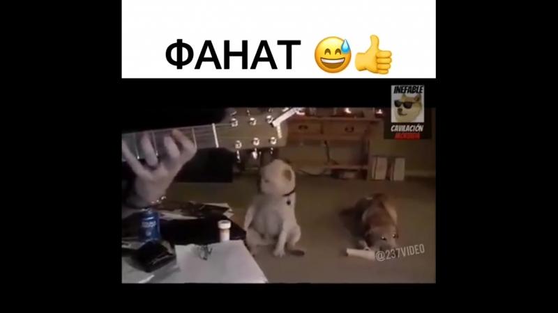 VIDEO 2019 11 29 16 01