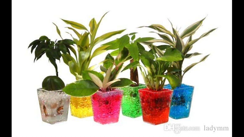 Гидрогель и аквагрунт для комнатных растений