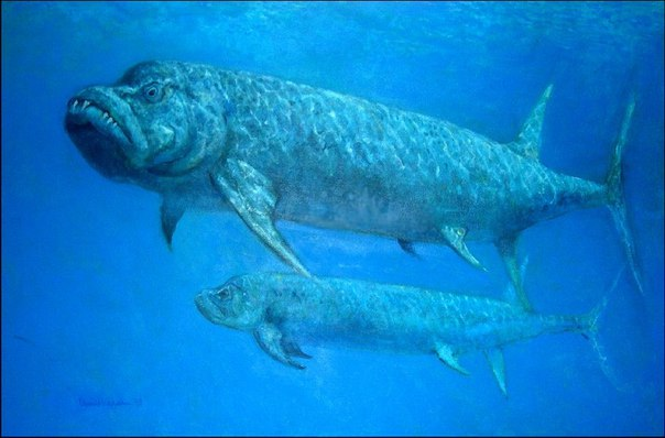 xiphactinus fish - HD1280×843
