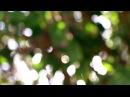 Интро без текста для канала скачать бесплатно HD Влог Дизайн 3025 природа