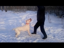 ZHADAR IZ BELOY SOTNI на зимней прогулке