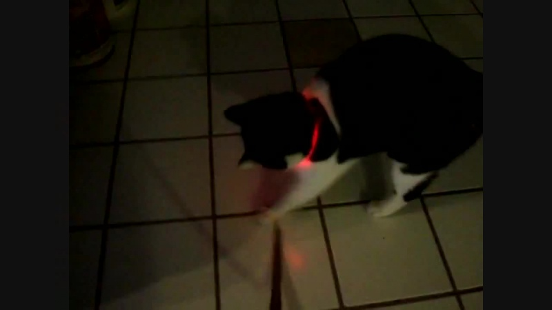 Светящийся ошейник для собак и кошек (Светодиодный LED ошейник для животных)