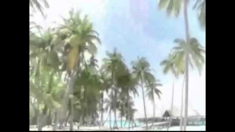 San Laurentino Palm Grove