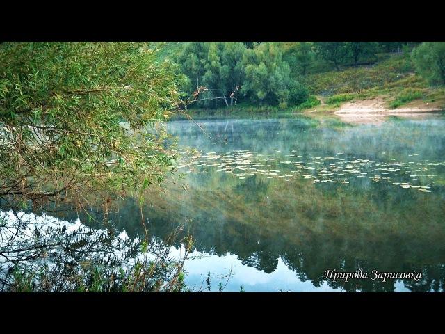 КРАСИВОЕ ВИДЕО Утро с Туманом на Реке с Пением Птиц и Звуками Природы ~ 🎧 🎶