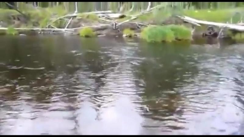Видео о рыбалке на тайменя Сплав река Сарчиха Часть 1 yaclip scscscrp