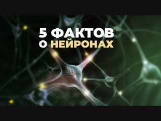 5 фактов о нейронах