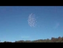 That was his last 500 birds in the sky. His last flight. In memory of Mr. Vito F_low.mp4