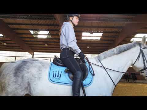 Jak często trenować konia.....