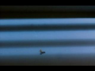 Ивовое дерево (2005), реж. Маджид Маджиди