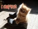 Приколы с котами с ОЗВУЧКОЙ – ПОПРОБУЙ НЕ ЗАСМЕЯТЬСЯ! РЖАКА ДО СЛЁЗ! Мои смешные животные– PSO