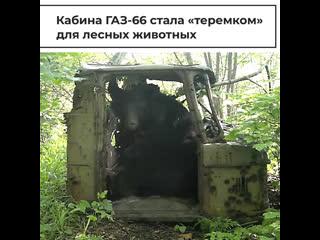 """Кабина ГАЗ-66 стала """"теремком"""" для лесных животных"""
