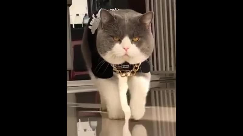 Босс котов