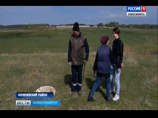 В Новосибирской области пастух спас тонувшую в реке двухлетнюю девочку