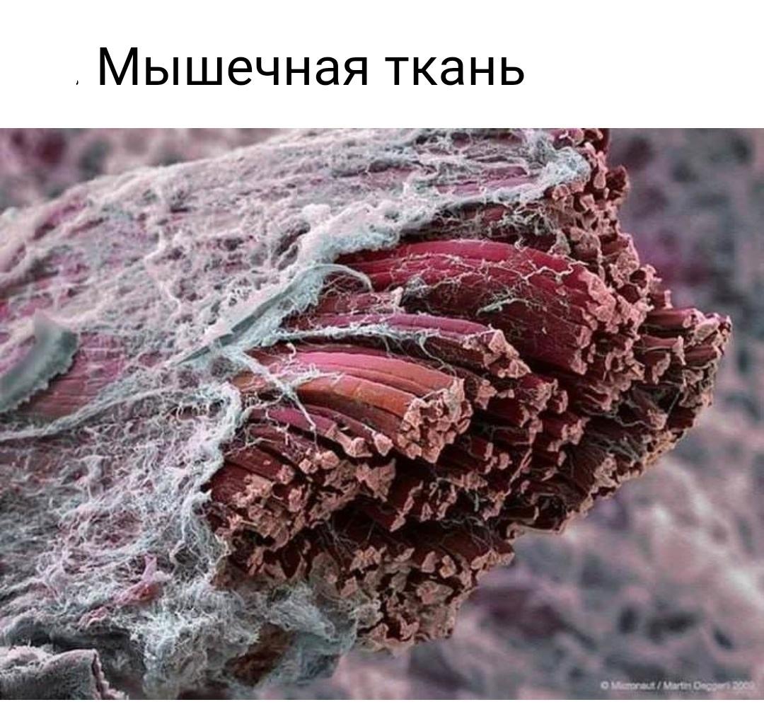 Макрофото