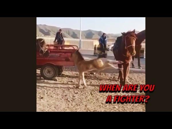 Funny videos Foal fighting Funny Animals Compilation Лучшие приколы с питомцами Pets Show❤