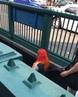 "BLAKE WEBBER on Instagram ""PRETY MUCH SAW OUR BOI TEKASHI 696969 GETIN ON THE SUBWAY WEN I WAS IN NEWYORK!! """