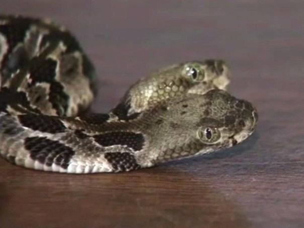 Змей Горыныч! Только очень маленький...