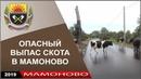 2019 Бесконтрольный выпас скота на ул Железнодорожной 18