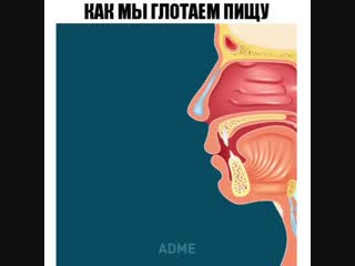 Фитнес Повар