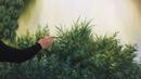 Cách vẽ bụi cỏ gần cho một góc tranh 3d, sơn dầu/acrylic