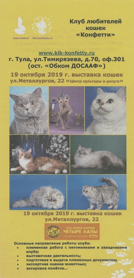 Афиша Тула Международная выставка кошек 19 октября Тула