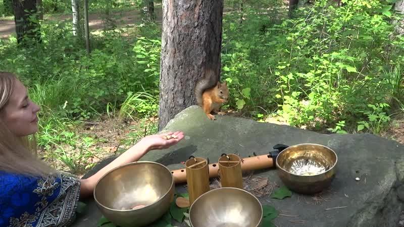 Sound healing (Native American flute in D, singing bowls, koshi)