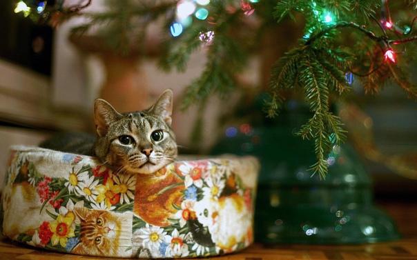 Обои На Рабочий Стол Новогодние Животные