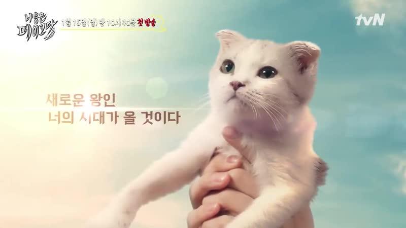 [13.12.2019] Wooseok (PENTAGON) - Decoding Meow EP.1 Preview