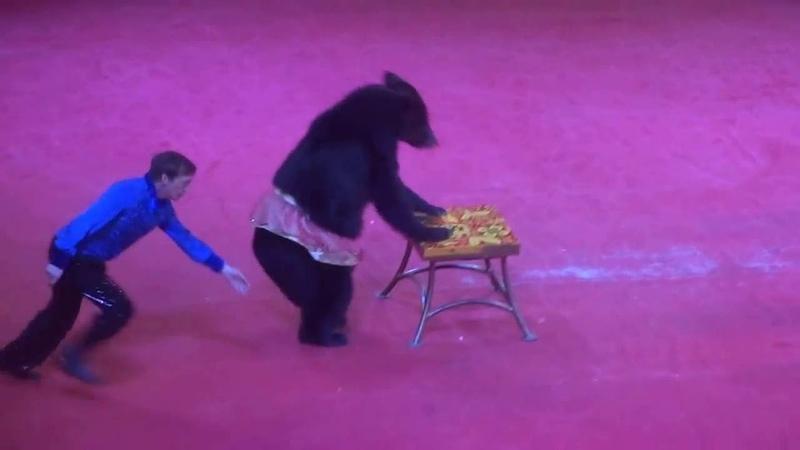 Цирк медведь танцует лезгинку Ayi lezginka oyniyir Cirkda 2016 Baki cirki Бакинский Цирк prikol
