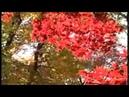 Ki Hilatzta Nafshi - Melody composed by Rav Baruch Ashlag
