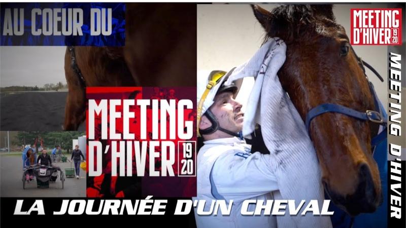 Au cœur du Meeting d'Hiver 2019 2020 la journée d'un cheval