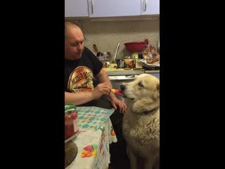 Папа кормит морженкой