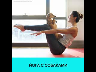 Зарядка для людей и собак  Москва 24
