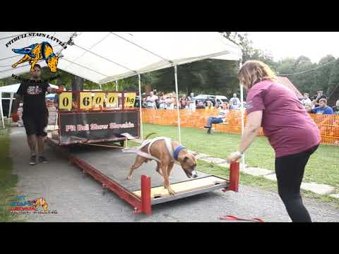 Weight Pulling 400-700 kg VII Pit Bull Show Slovakia 2019